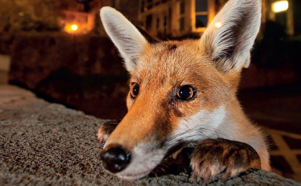 La mostra Wildlife Photographer of the Year 2017 si è tenuta a Milano alla Fondazione Luciana Matalon in Foro Buonaparte