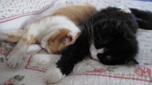 Esercizio di mindfulness: osserviamo un gattino