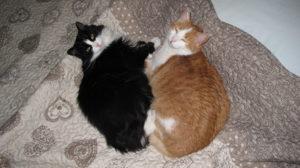 L'intelligenza dell'intera specie non è in grado di creare la perfetta, cangiante eleganza di un gattino…